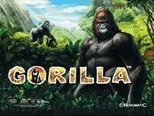 Лотомат Gorilla